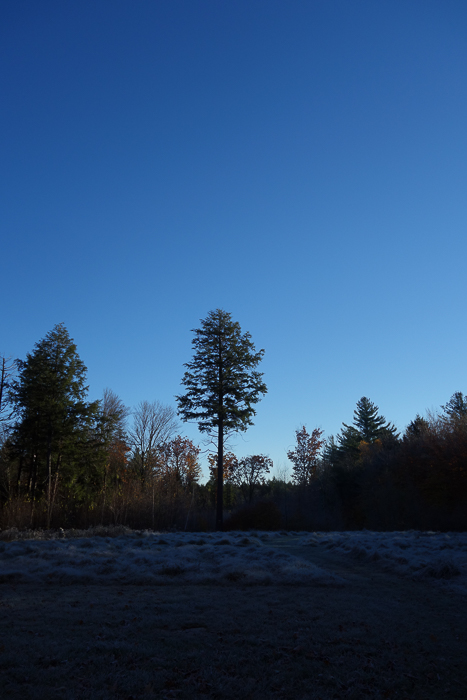 In and Around - First Heavy Frost-19.jpg