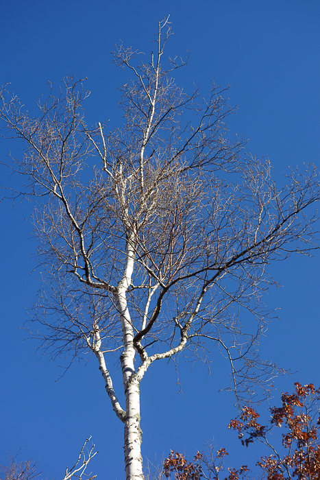 In and Around - First Heavy Frost-20.jpg
