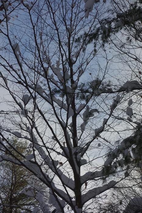 Snow, Ice, Sky, Trees-7.jpg