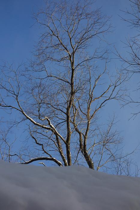Snow, Ice, Sky, Trees-6.jpg