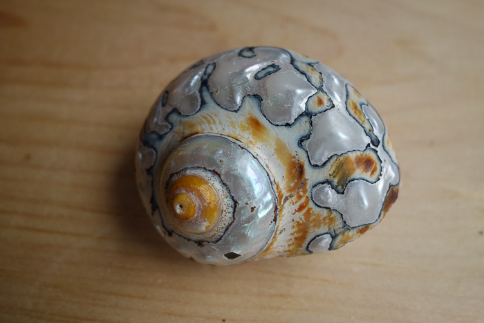 IaA-Antique Shells-10.jpg
