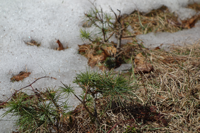 Chase the Snow-18.jpg