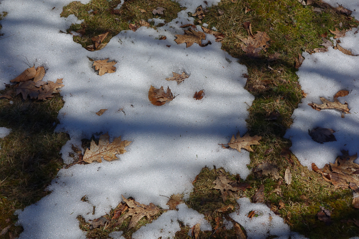 Chase the Snow-8.jpg