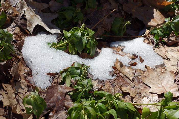 Chase the Snow-3.jpg