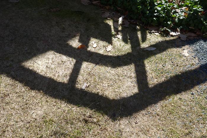 shadows on a spring lawn