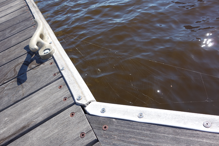dock and cleat