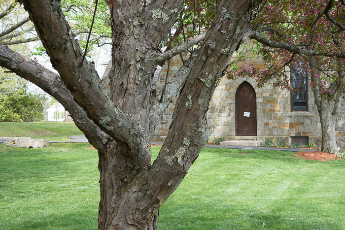 tree trunk next to a church door