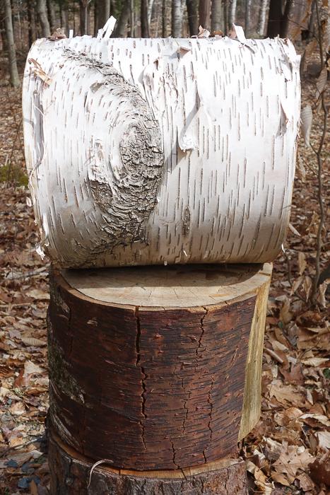 Fave Trees 2019-9.jpg