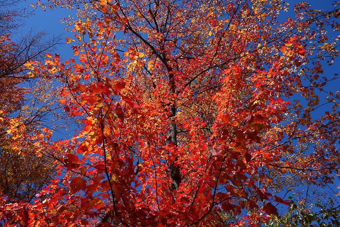 Fave Trees 2019-8.jpg