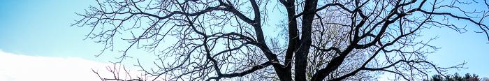 Fave Trees 2019-3.jpg