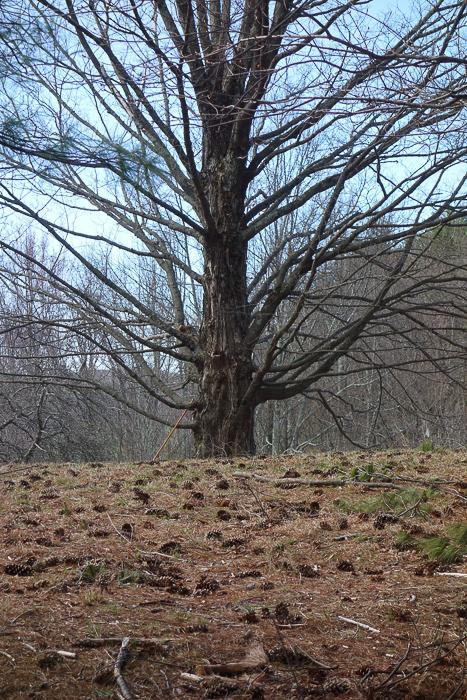 Fave Trees 2019-2.jpg