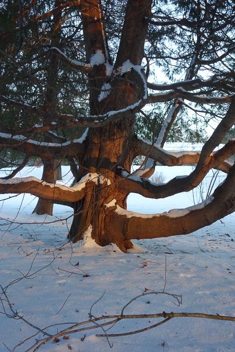 Fave Trees 2019-1.jpg