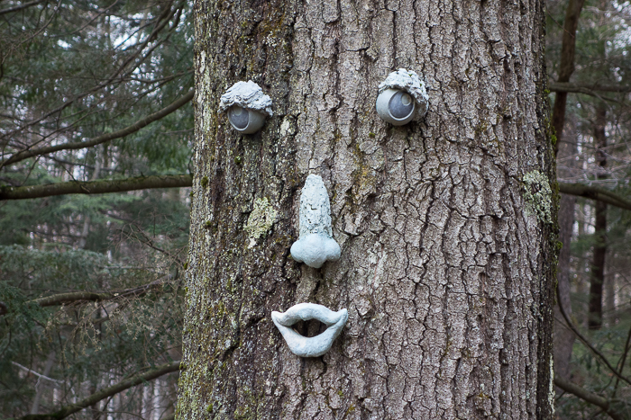 a face on a tree