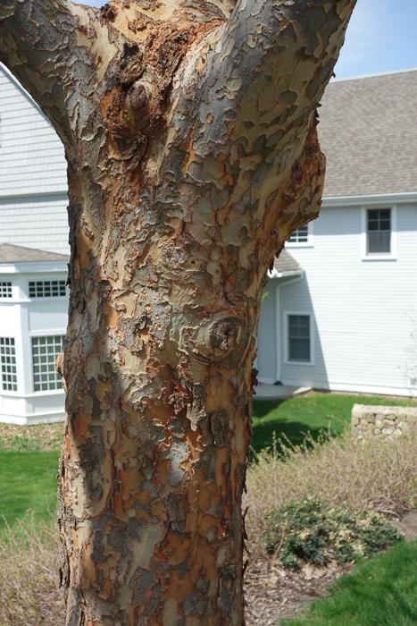 A tree's shoulder?