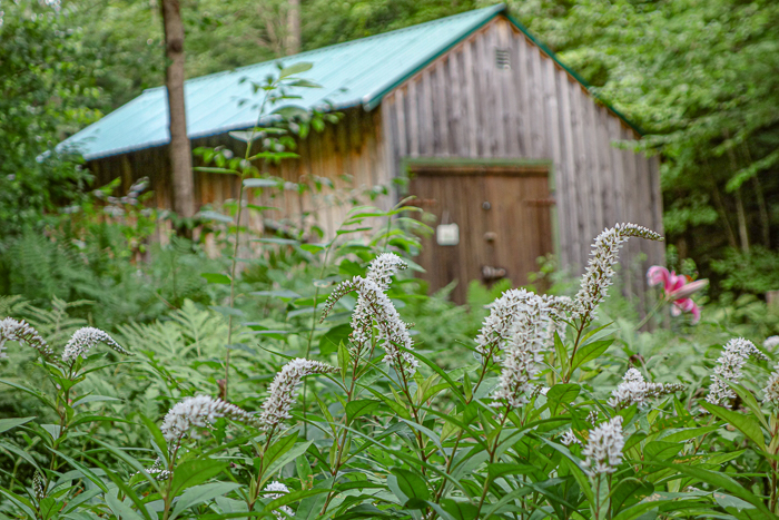 Late summer blooms-8.jpg