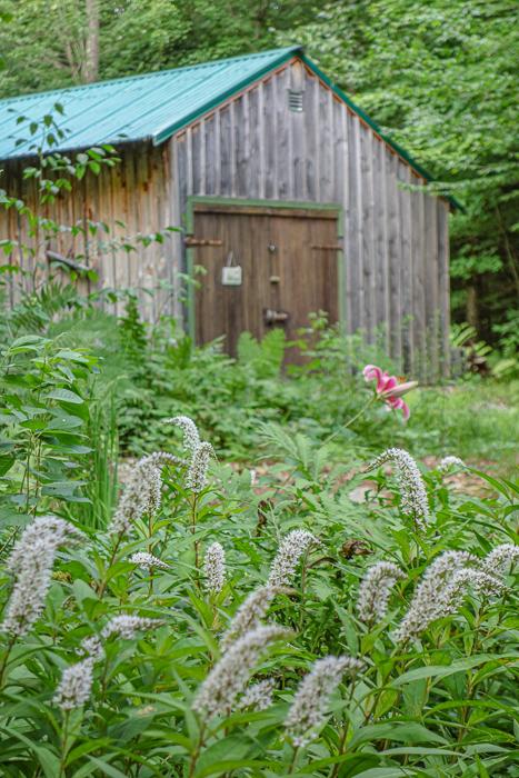 Late summer blooms-7.jpg