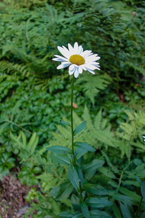 Late summer blooms-6.jpg