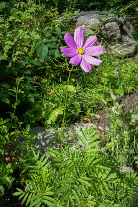 Late summer blooms-2.jpg