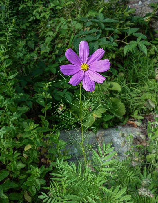 Late summer blooms-1.jpg