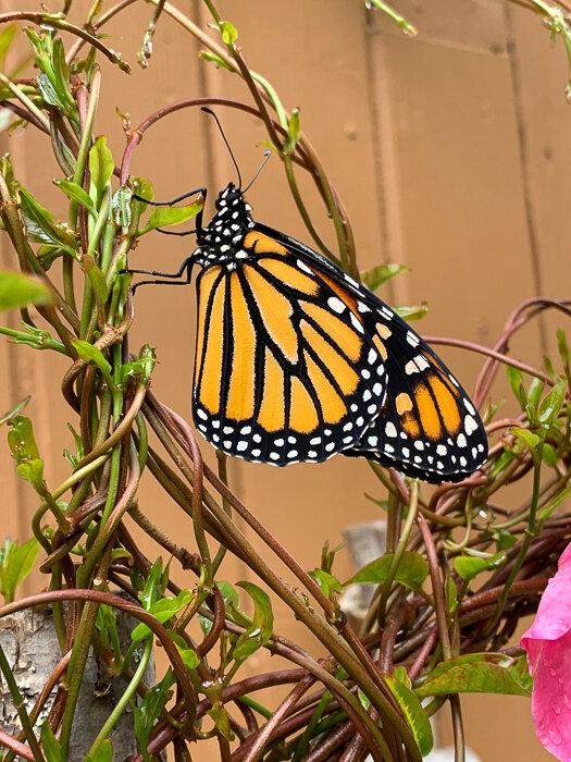 Monarch Moments-28.jpg