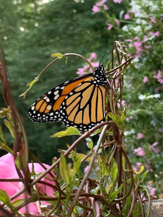 Monarch Moments-19.jpg