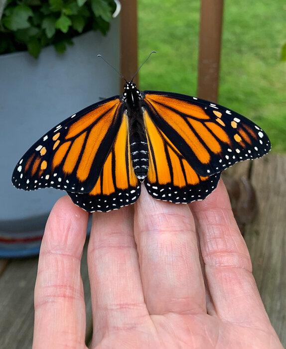 Monarch Moments-16.jpg