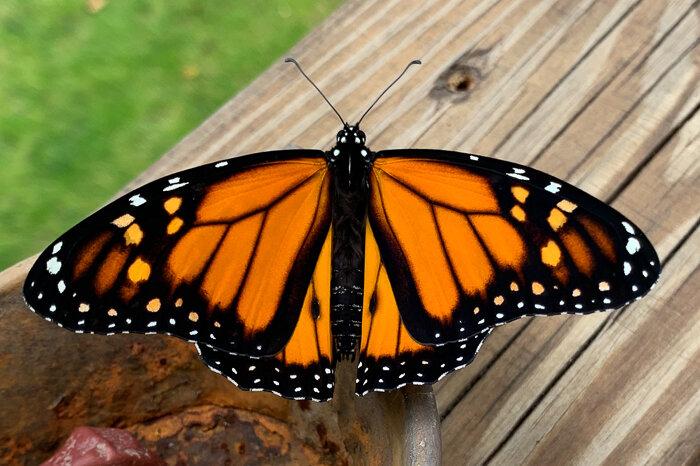 Monarch Moments-12.jpg