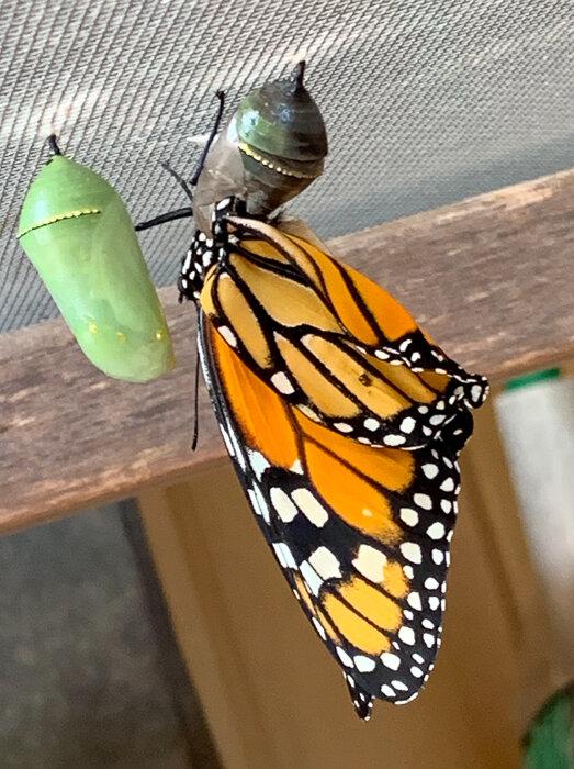 Monarch Moments-11.jpg