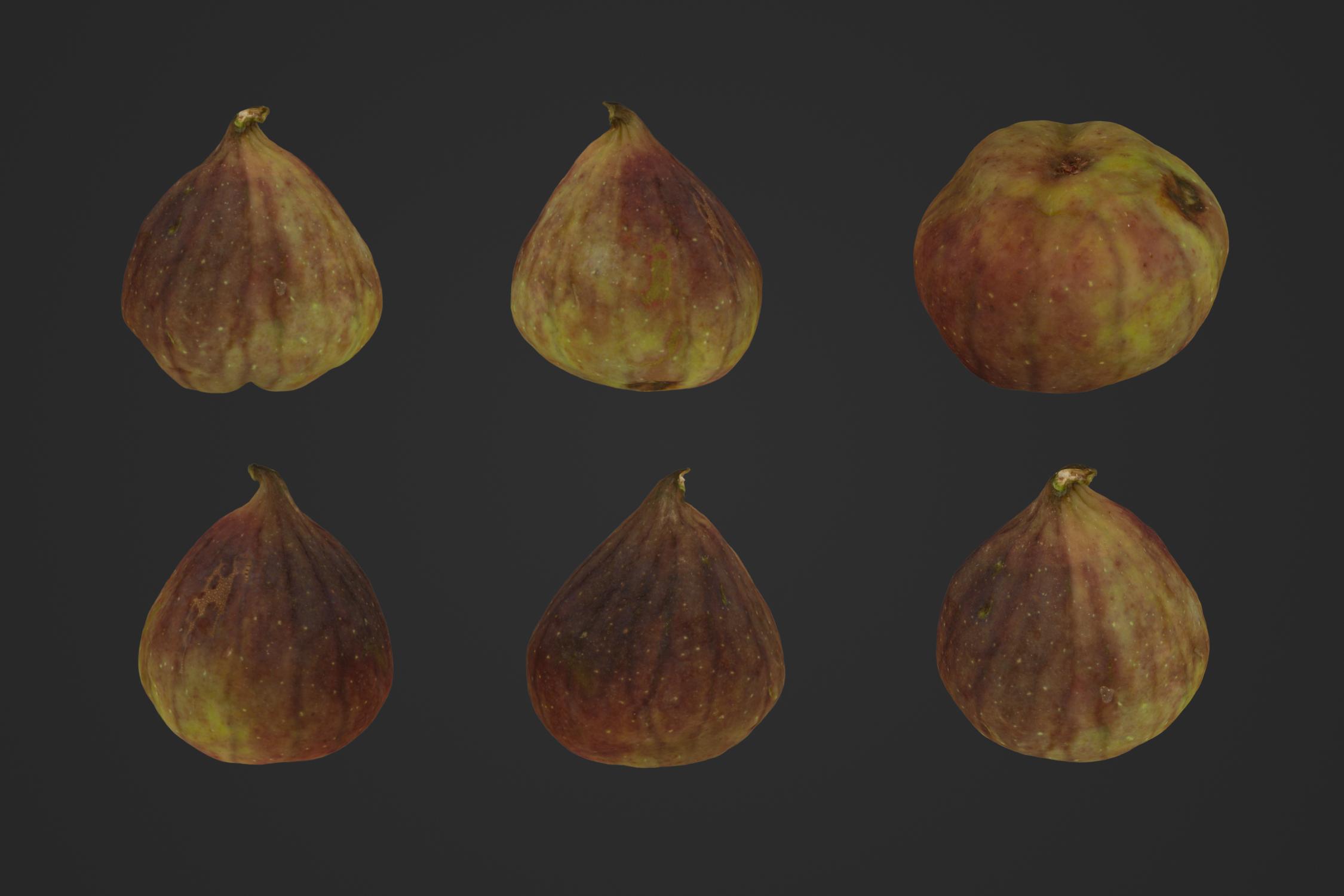 Fig_1_1.jpg