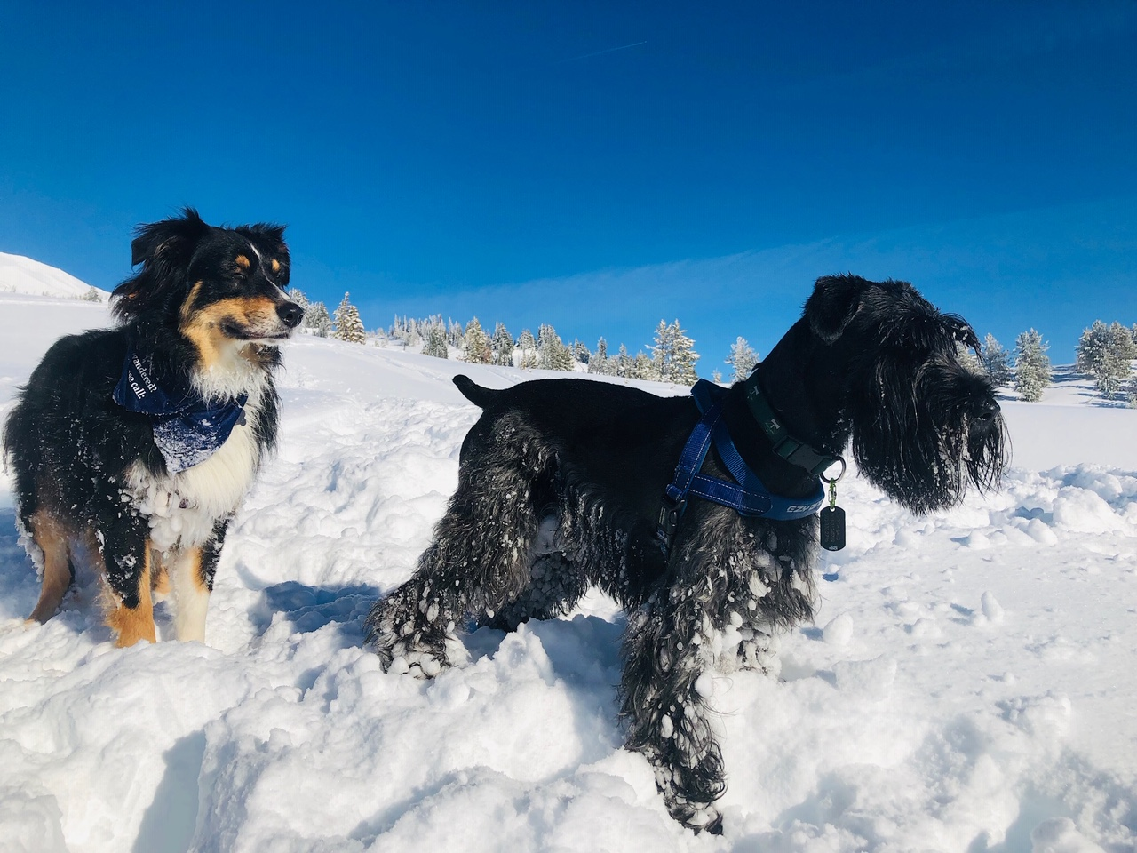 Archie and Mookie in the snow.jpg