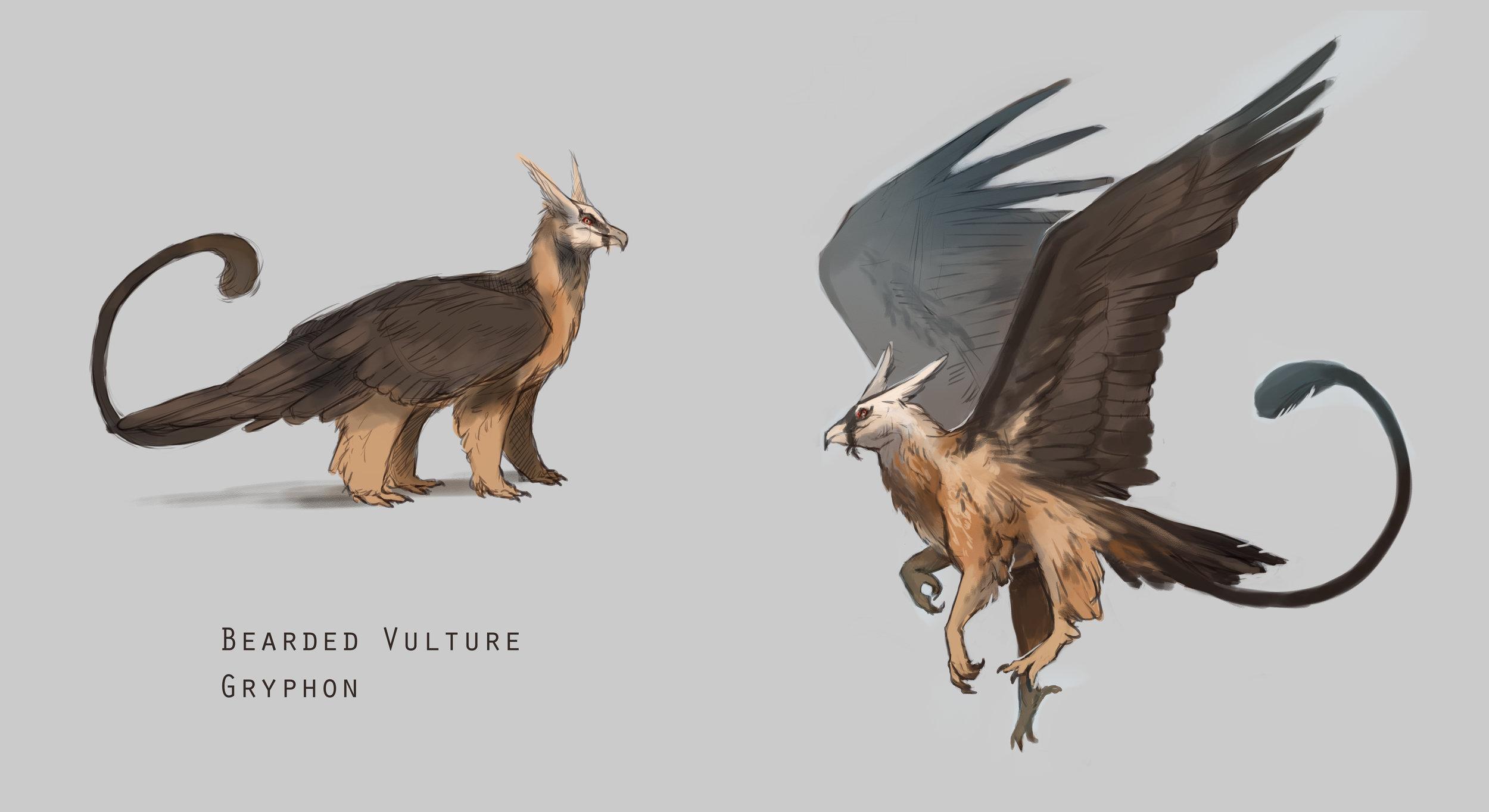 bearded vulture gryphon 2-2.jpg