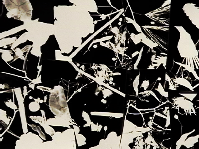 photograms on the wall