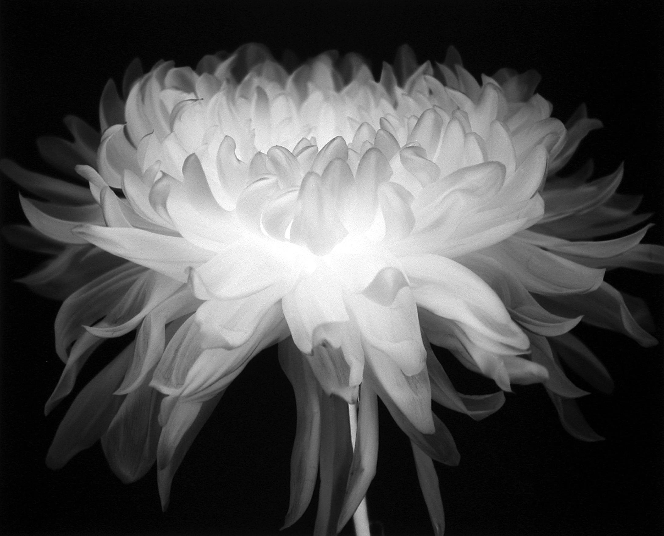Flower (Number 80), 1997