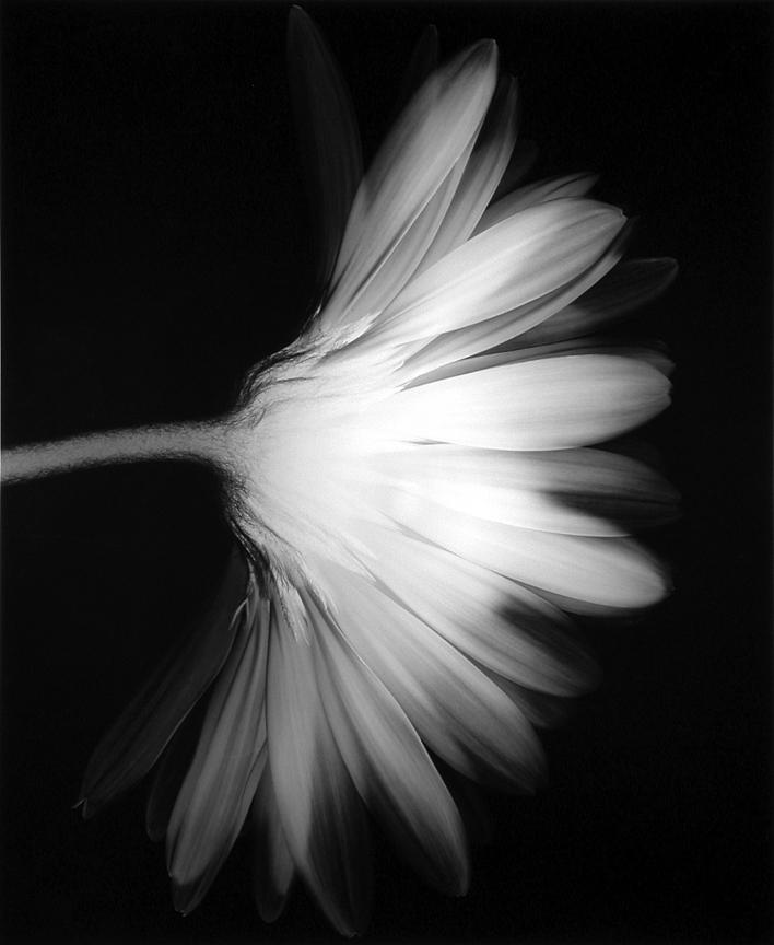 Flower (Number 11), 1993