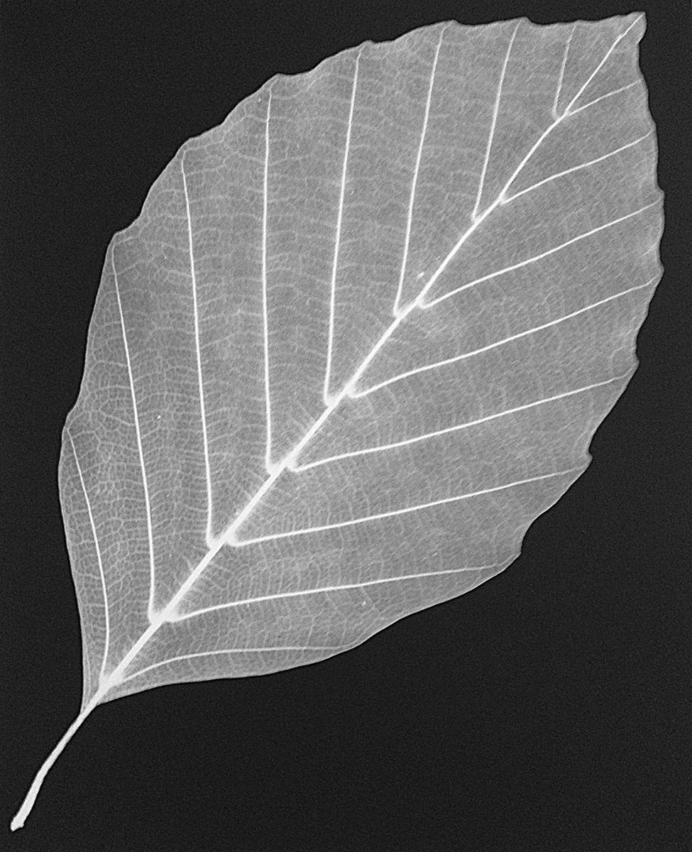 Leaf 35, 2014
