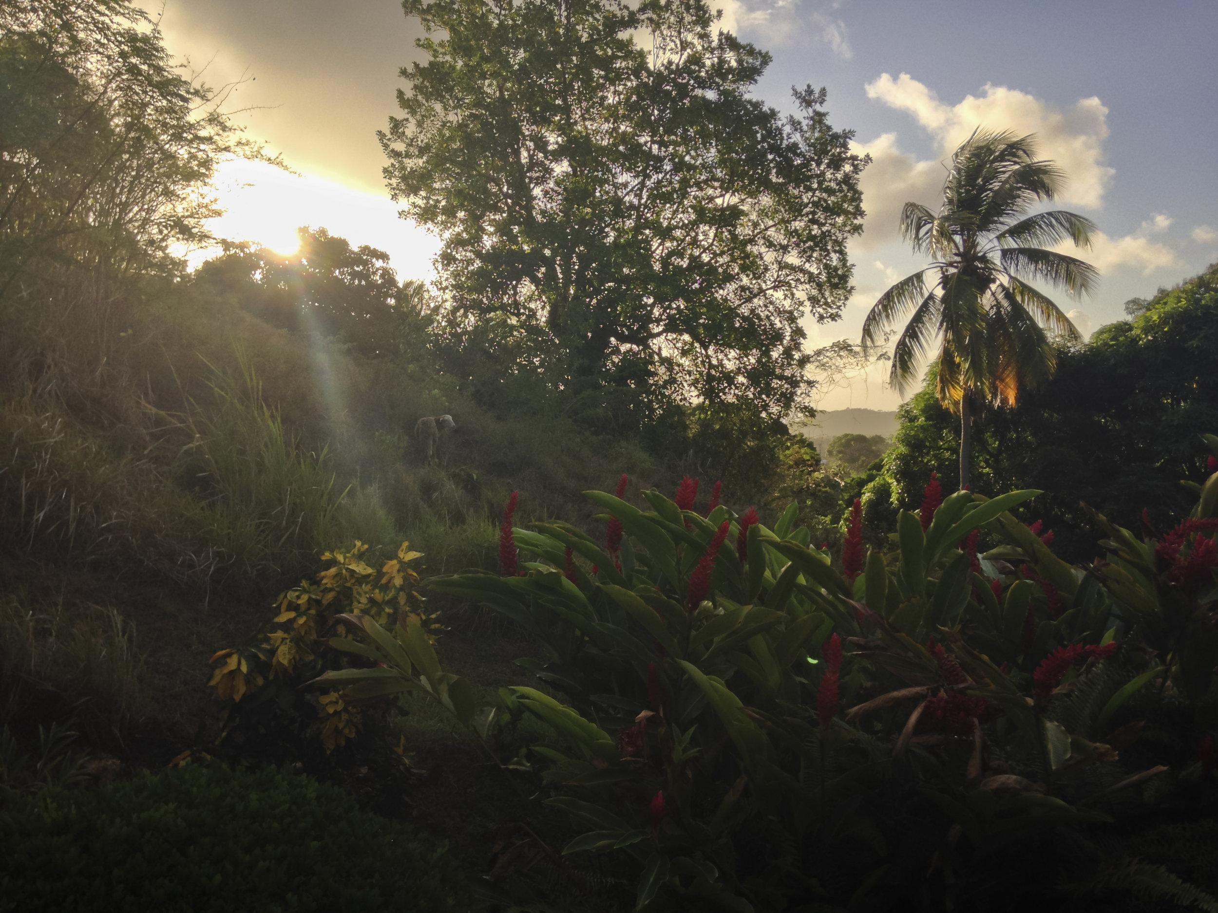 Le Vauclin, Martinique, France, Mars 2019