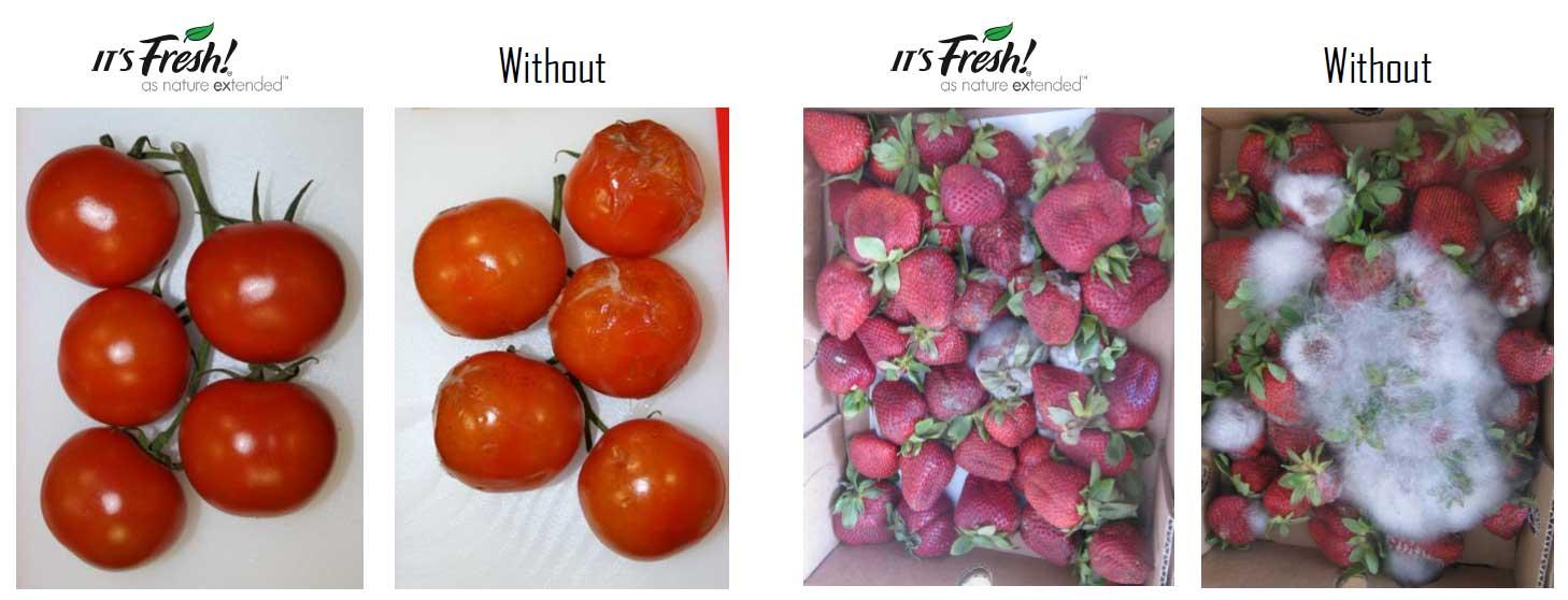 Its-Fresh-Impact.jpg