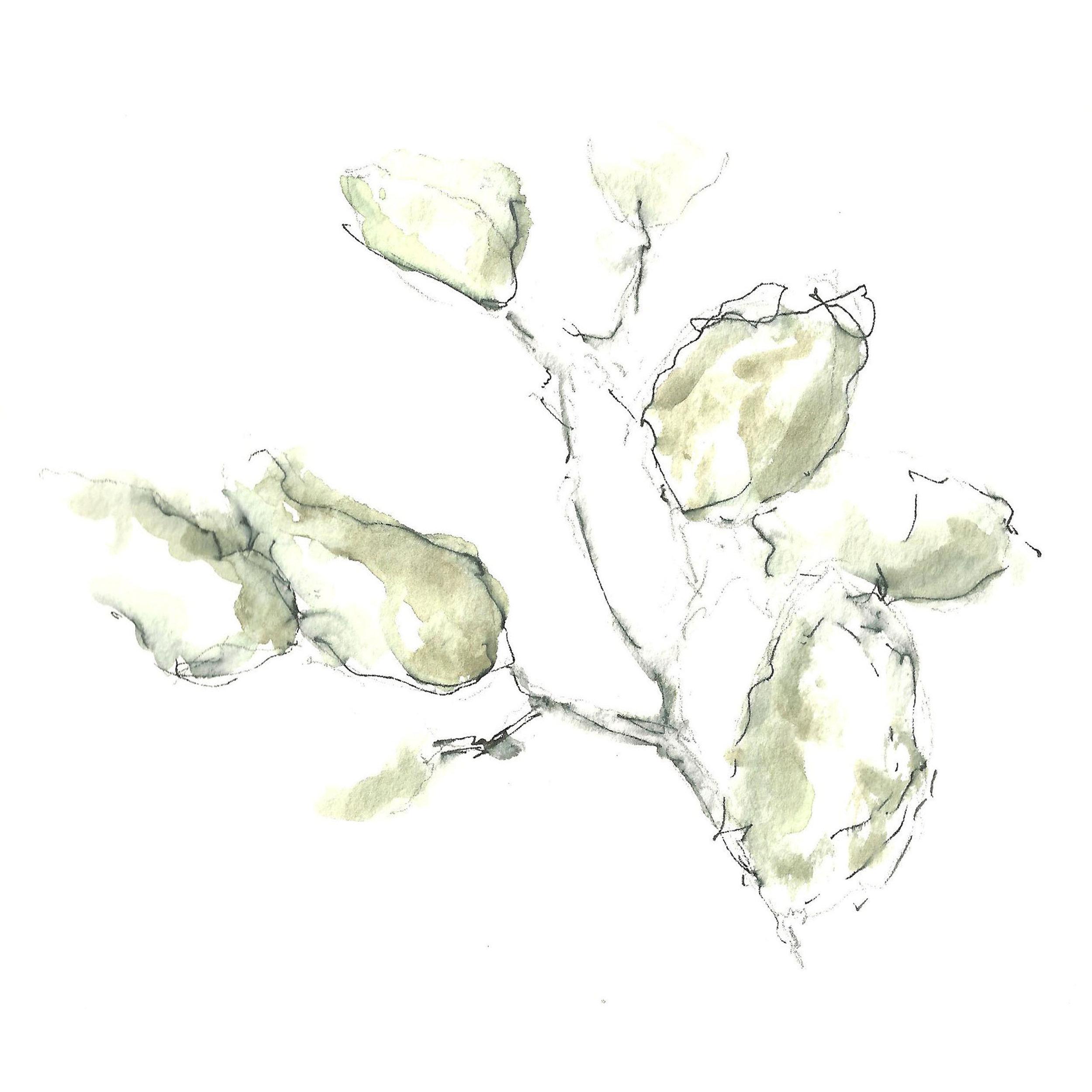 Watercolor Leaves A.jpg