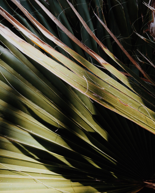 palm_tree_shadow_menorca
