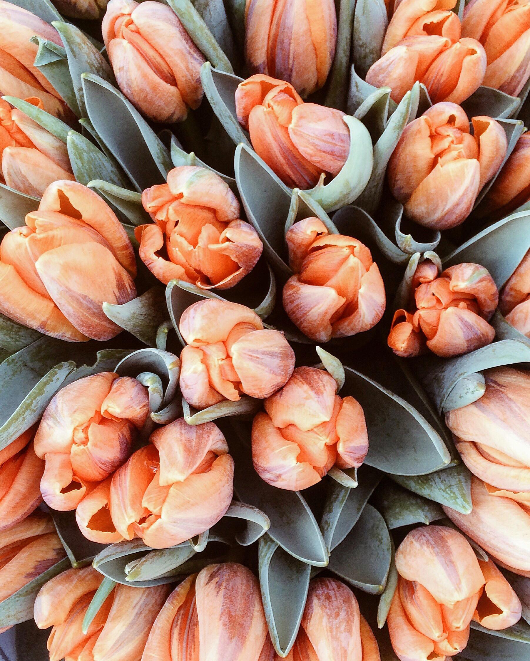 flowers_sunday_tulips_london