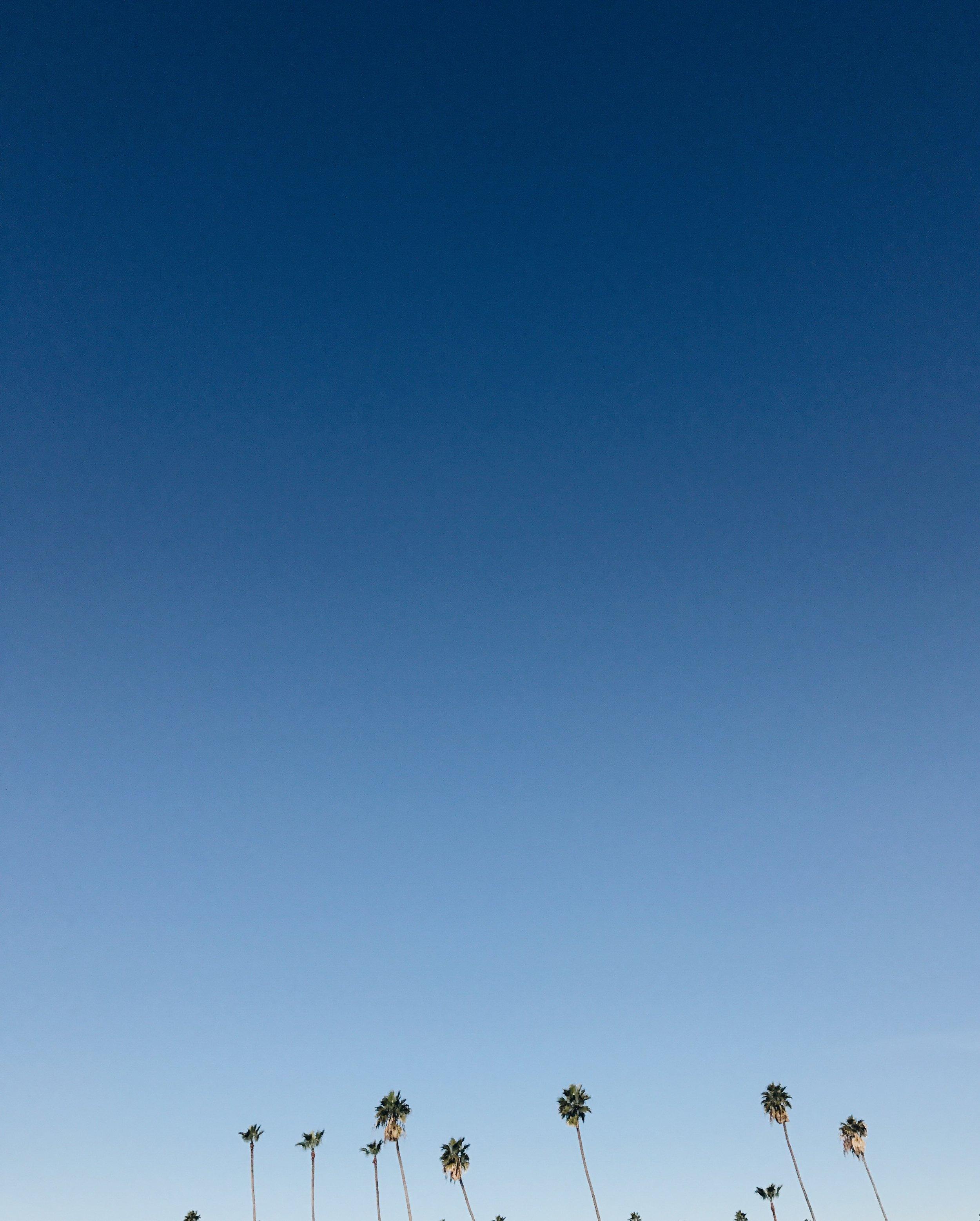 hotel_normandie_palmtrees_losangeles