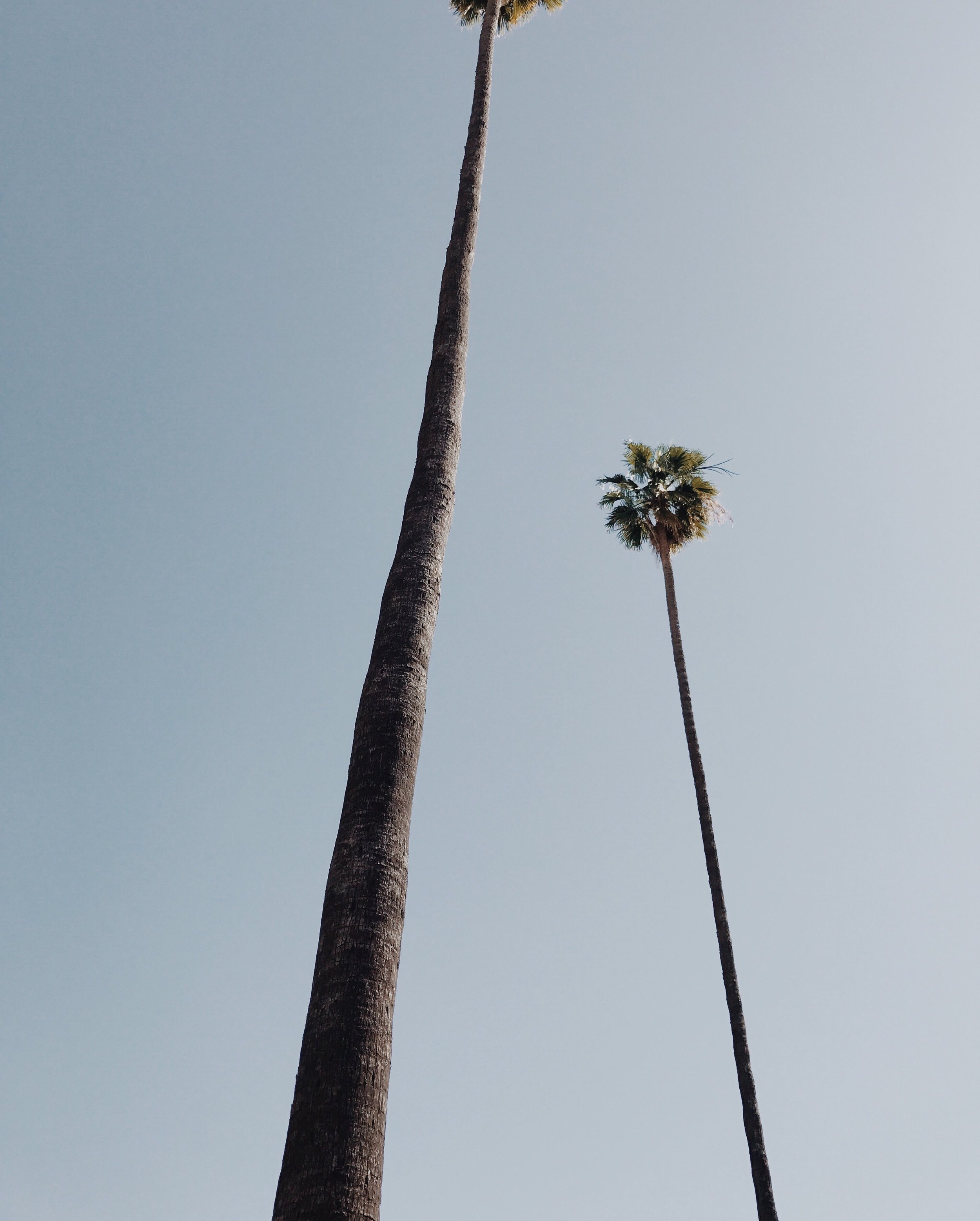 la_palmtrees_cali