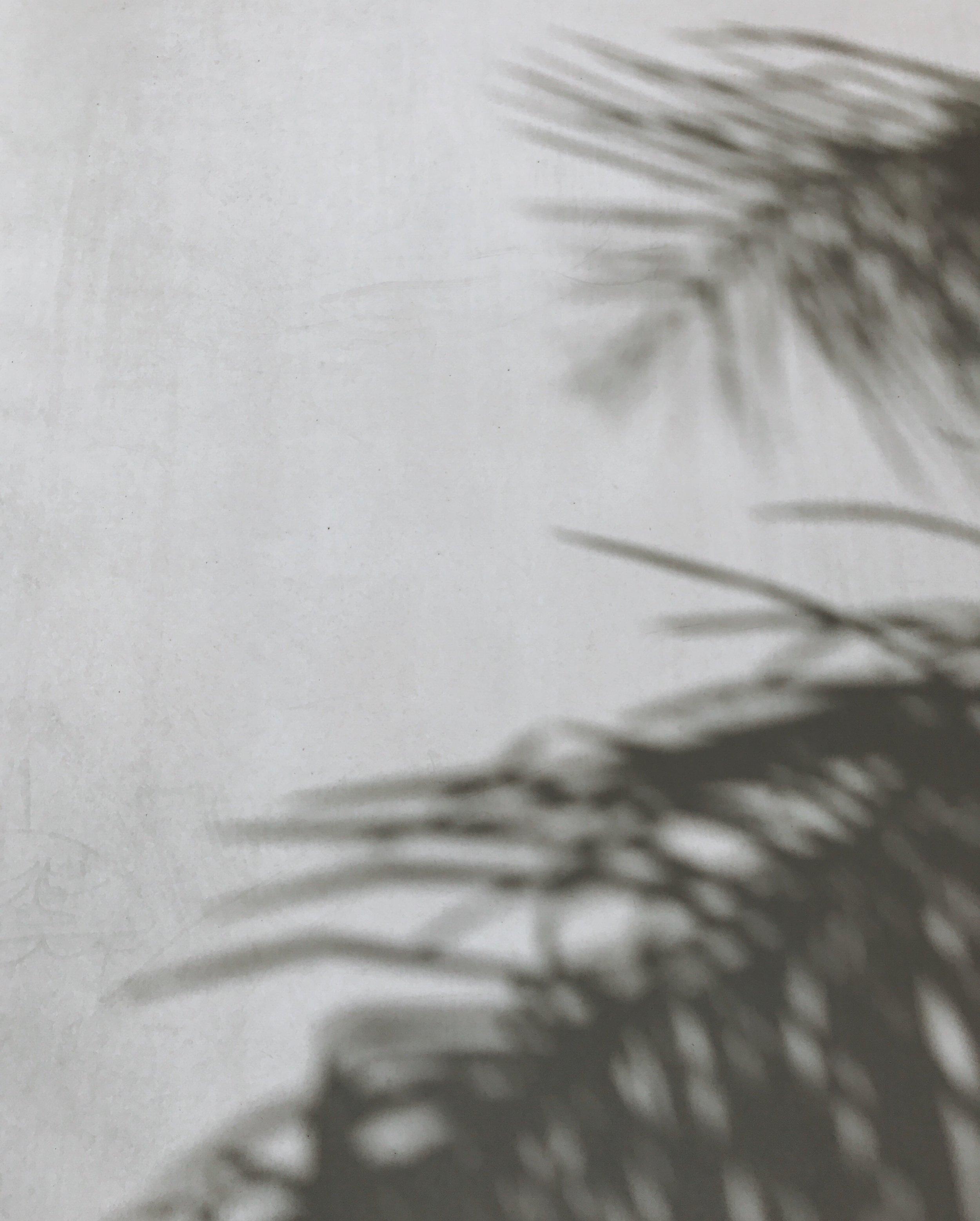 palm_shadows_la_cali_losangeles