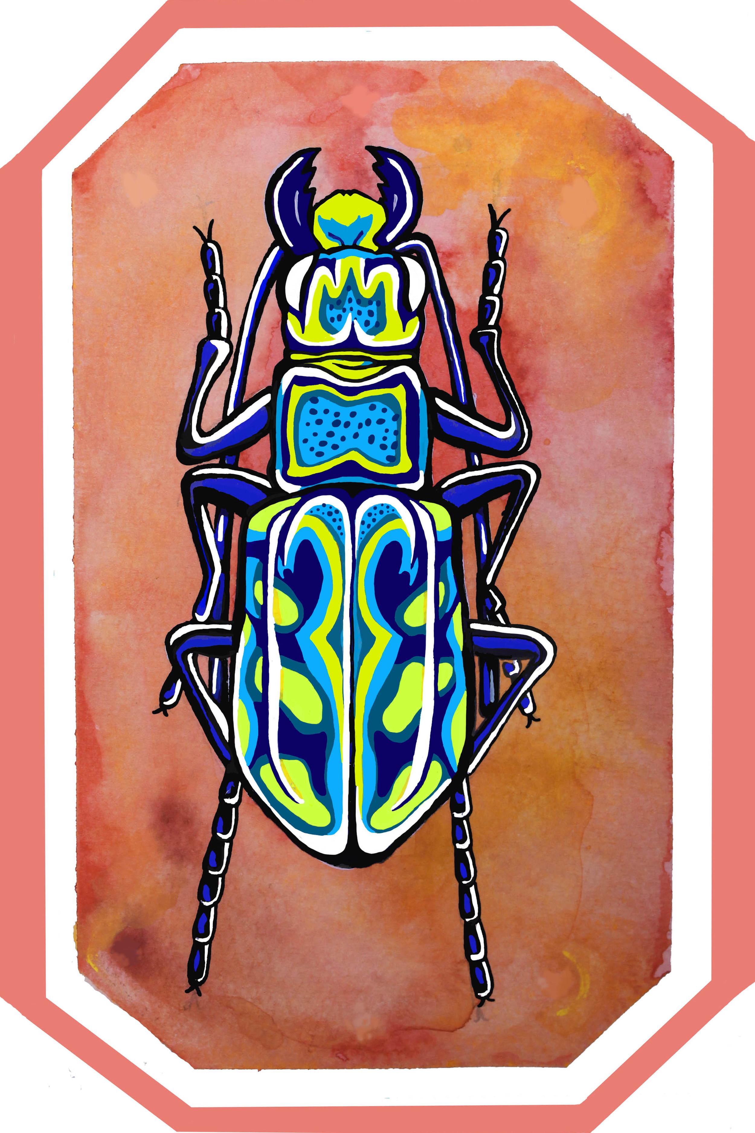 cicindela nitida  gouache, watercolor, and photoshop  7x5  2016