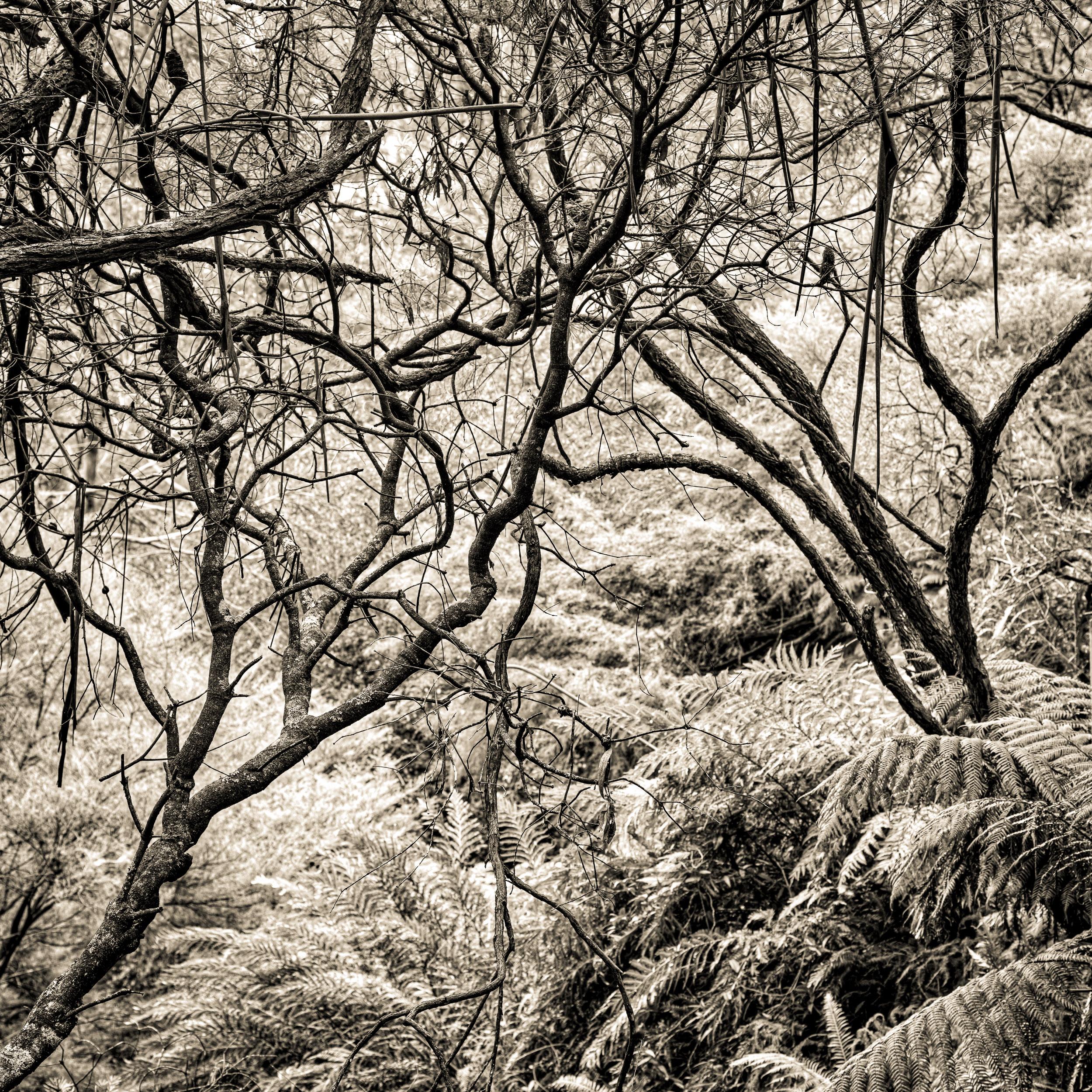 Leura Cascades, The Greater Blue Mountains World Heritage Area, Australia - Photograph © Len Metcalf