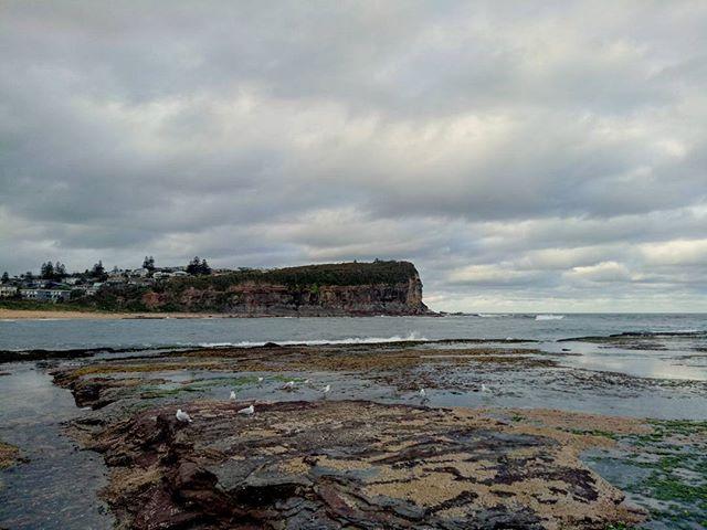 Monday's done right 👌 . #thetravelheads #beachlife #monavale #northernbeaches #sydney #travel #australia #travellerau #lonelyplanet #mona #rockpool #explore #beautifulview #lovetotravel #explore #bucketlist #beach #surf #backyardviews #locals . @sydneynorthernbeaches  @northernbeacheslocal  @sydney  @australia  @themanlydaily  @beachescouncil . Photo Credit . @thetravelheads