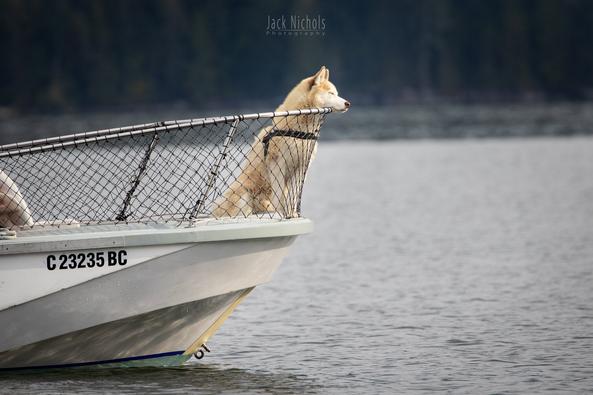Campbell River, Water - Dog at the front of whale watching boat-20190907.jpg