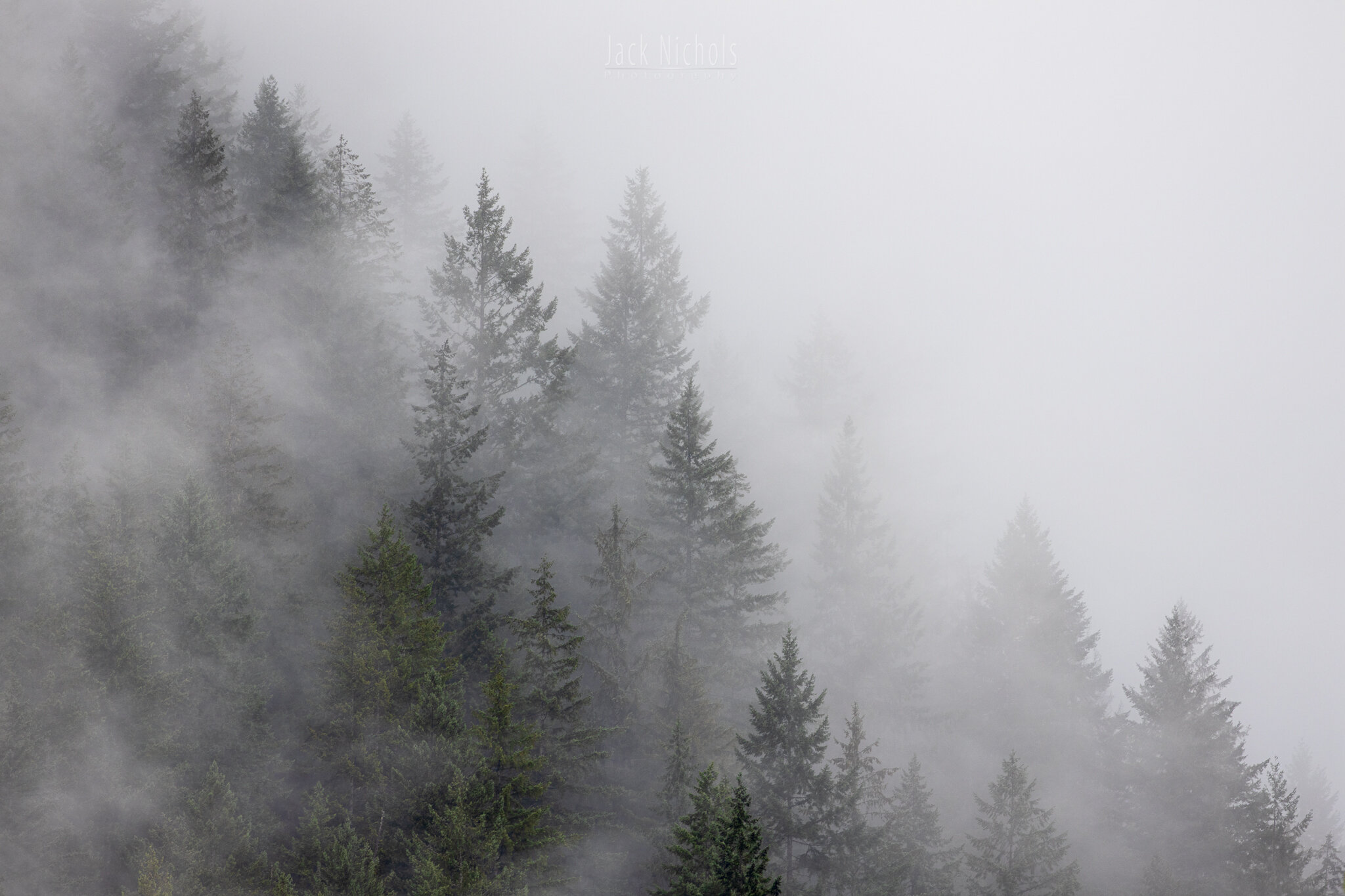 Campbell River, Toba Inlet - Foggy forest ridgeline-20190908.jpg