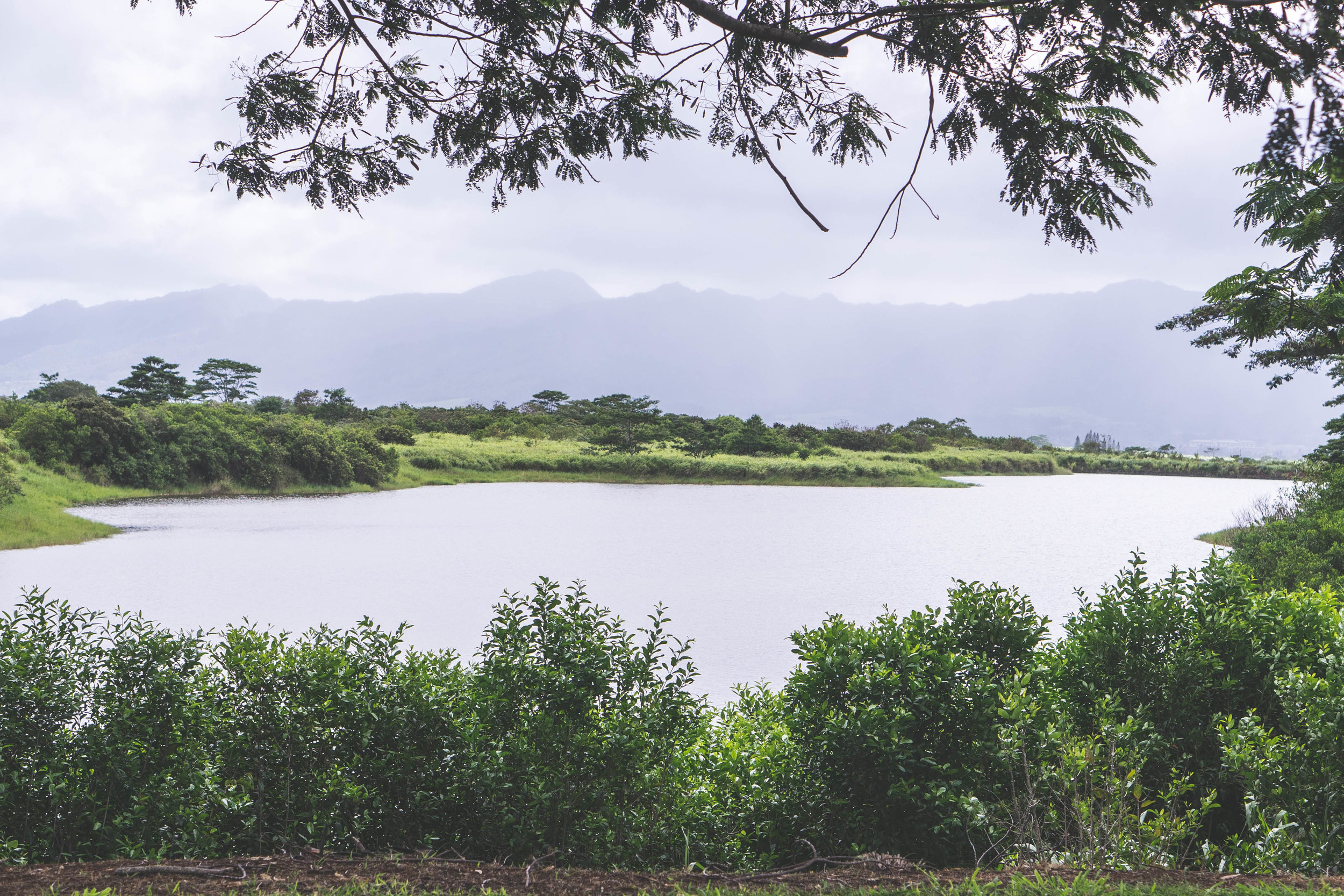 hawaiiwithmahalo-25.jpg