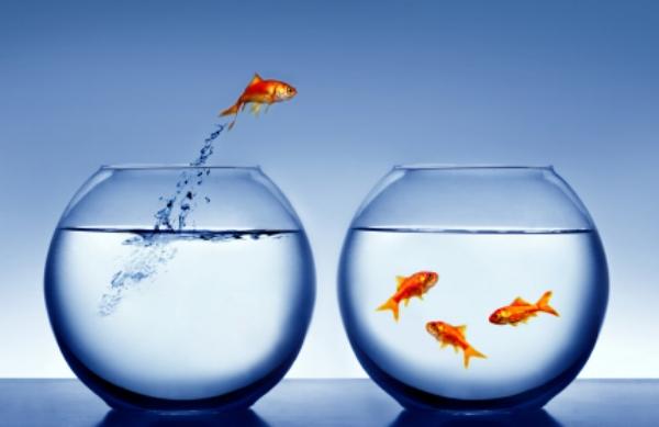 Membership Goldfish Bowl.jpg